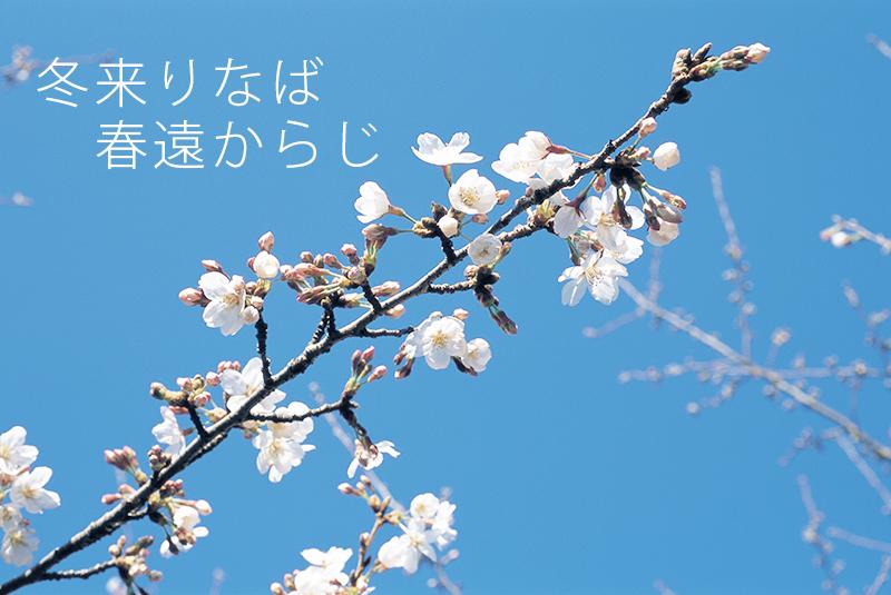 ば 遠から 来 りな 冬 じ 春